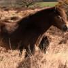 Krátký filmový dokument o divokých koních seznamuje diváky s nejnovějšími vědeckými poznatky