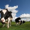 Domácí zvířata zanášejí do krajiny nebezpečné jedy, ohrožují tím přírodu