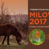 Kalendář s divokými koňmi pomůže záchraně velkých kopytníků