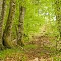 ceska-krajina-05-lesy-stromy