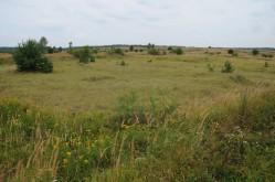 ceska-krajina-rezervace-milovice-milovicka-pastvina