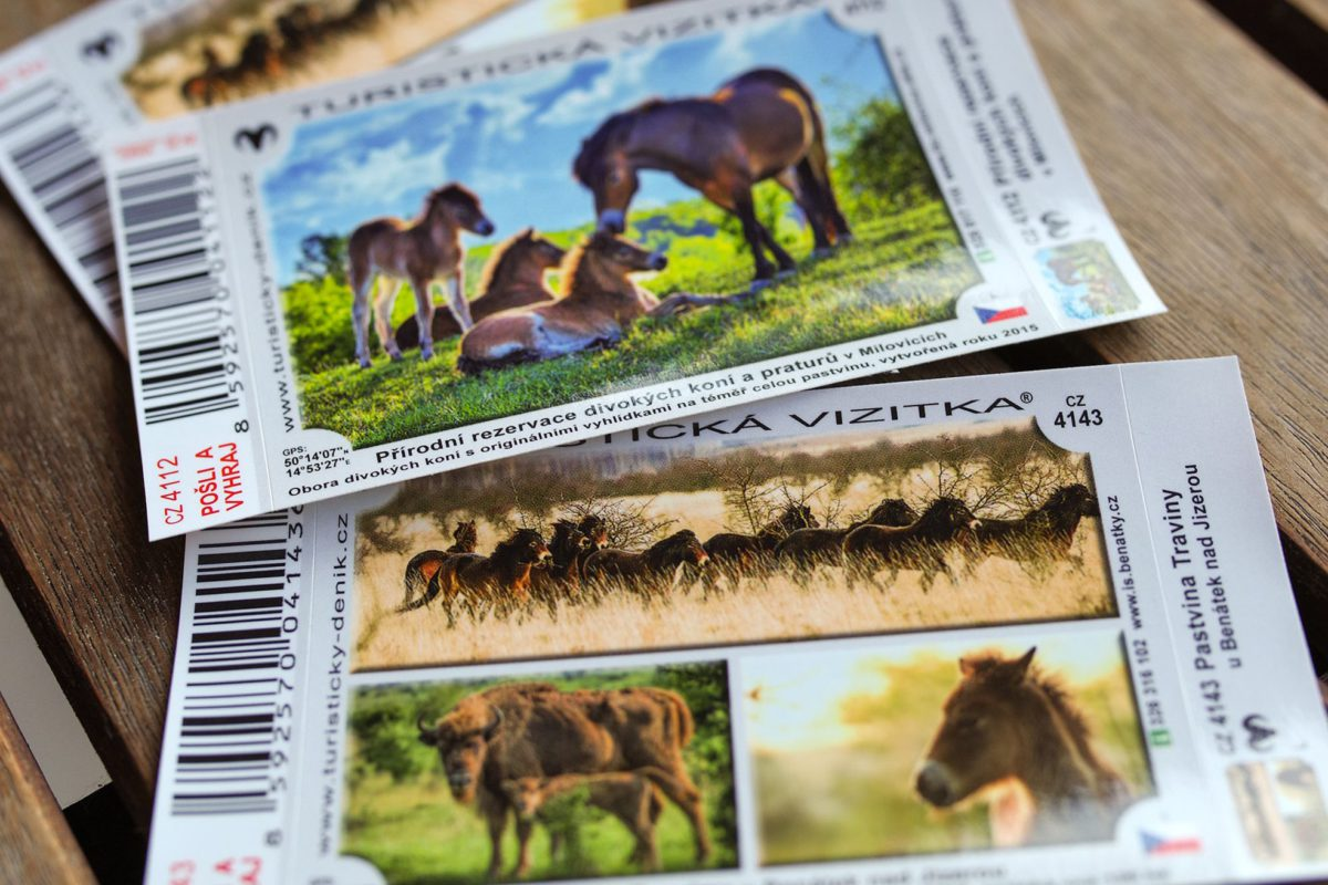 turistická vizitka velcí kopytnici, divocí koně, zubři, turistické vizitky