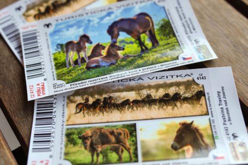 Turistická vizitka láká návštěvníky za zubry a divokými koňmi