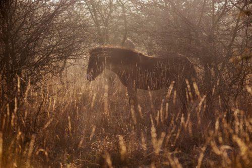 Se záchranou divokých koní pomáhá nová rezervace u Rokycan i dvě východočeské lokality
