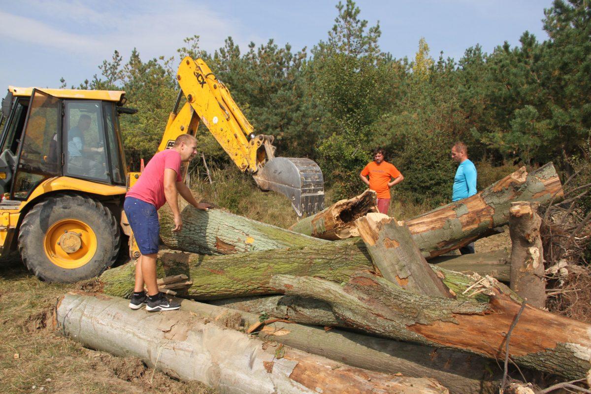 Kmeny dubů dnes v rezervaci velkých kopytníků vytvořily nový biotop pro ohrožené brouky a včely samotářky