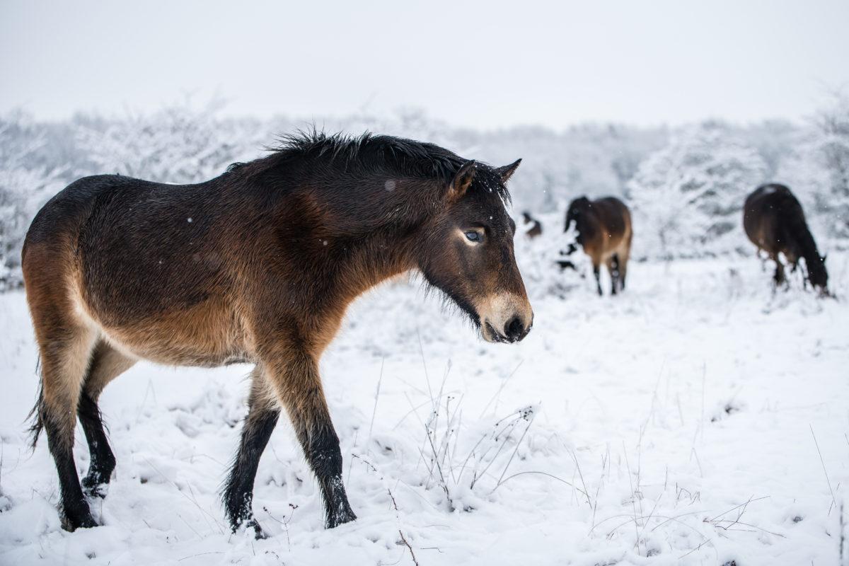 Divocí koně mají na sociálních sítích stovky tisíc fanoušků v Česku i v zahraničí a miliony zhlédnutí